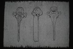 Three bones Woodcut - white ink on black paper - Winner Stephen Gooden Prize 2011